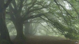 _73200117_c0045011-ancient_beech_woodland-spl