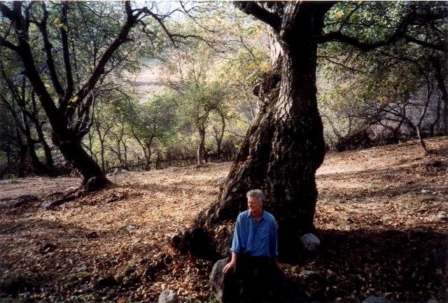 walnut-tree-deakin